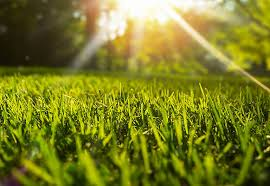 The Complete Lawn Care Guide